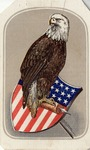 The New Picture of the Eagle.