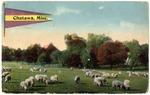 Sheep in a grassland