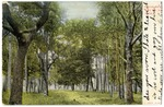 Grassy Field with Trees
