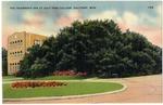 The Friendship Oak At Gulf Park College